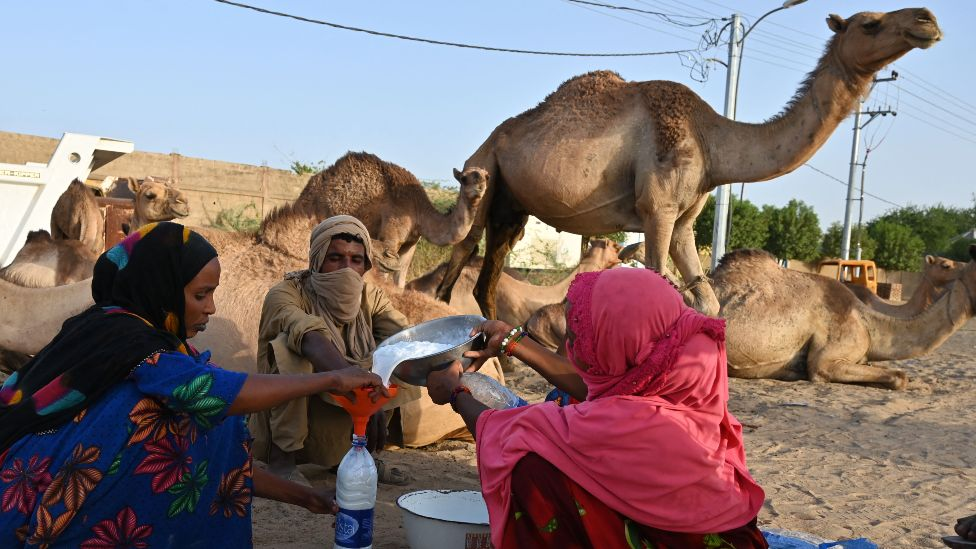 A woman pours camel milk from a dish into a plastic container near N'Djamena, Chad - Tuesday 4 May 2021