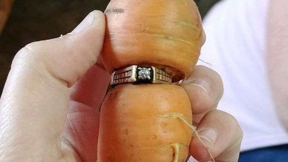A diamond ring was pulled up with a carrot