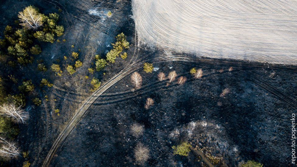 Aerial photo of a burnt forest