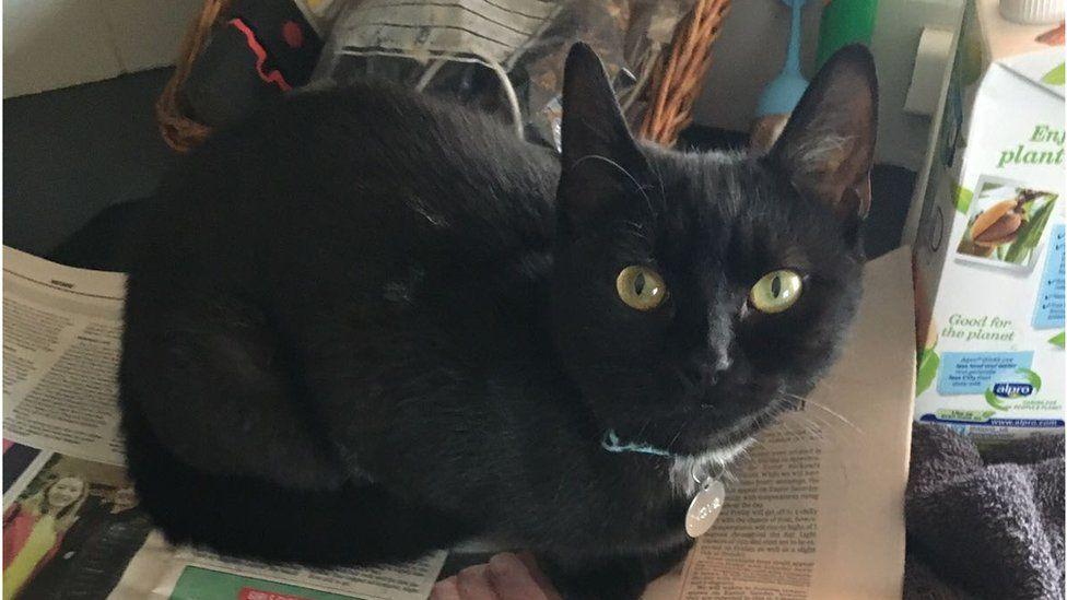 nova the black cat