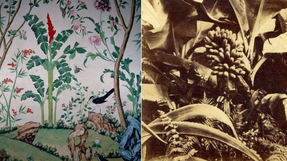 The wallpaper and a historic picture