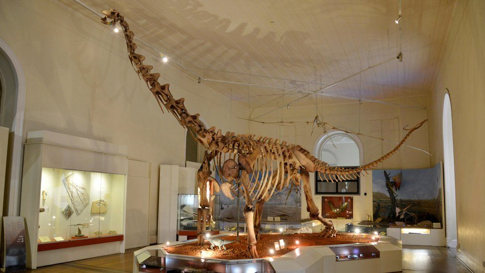 Dinosaur fossil on display inside the National Museum