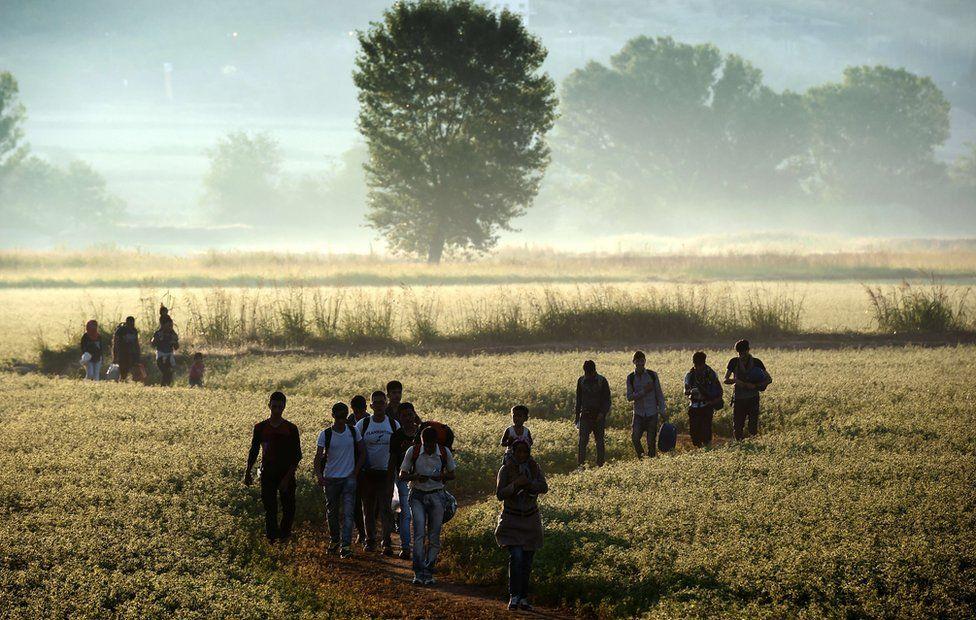 Migrants wandering through Greek field