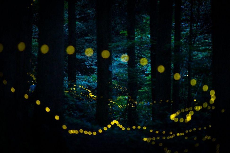 светящиеся мошки в ночном лесу