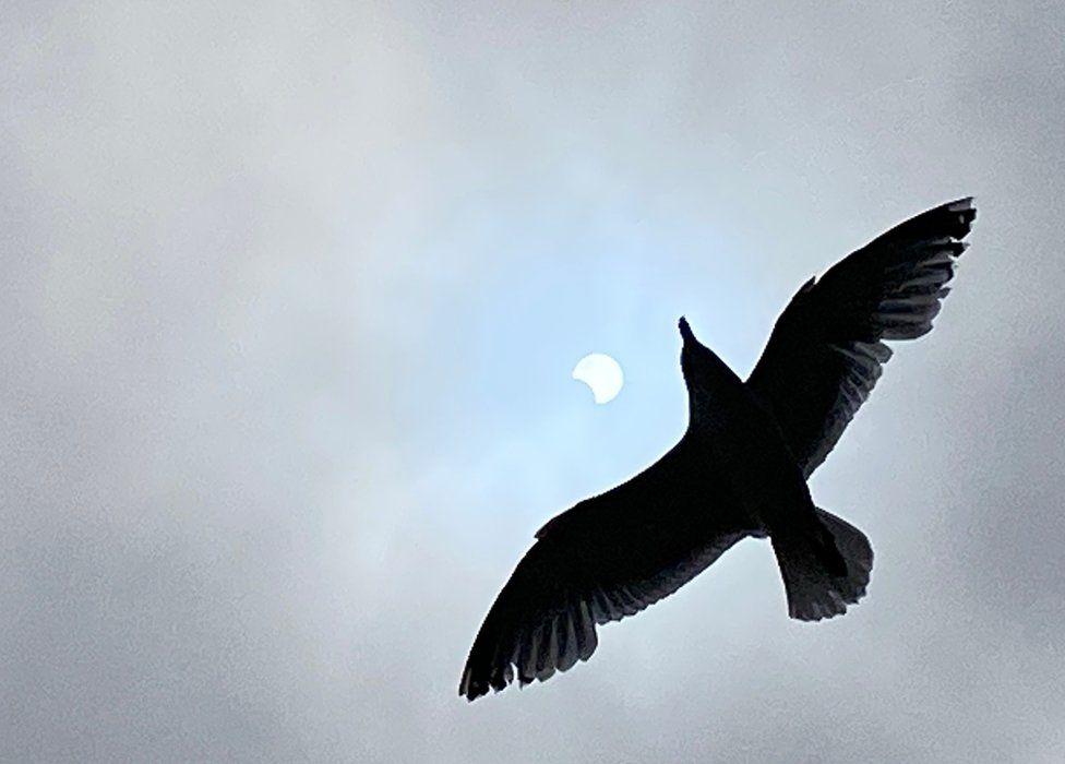 Zog dhe eklips në Romney Sands
