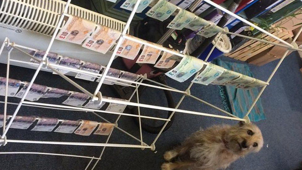 Office dog guarding money drying on racks