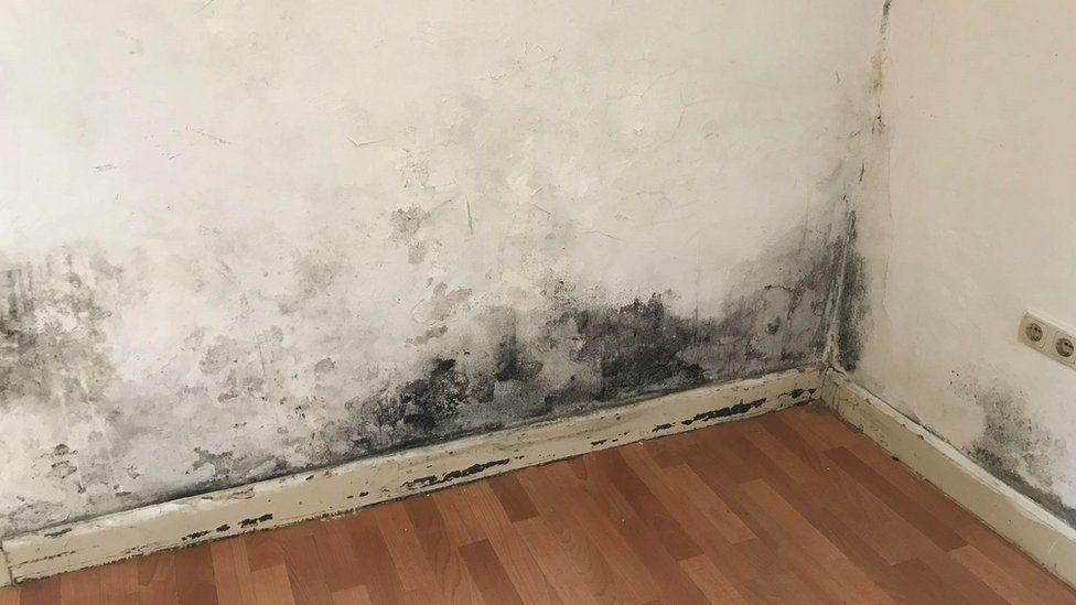 Picture showing mould in a house for meat factory workers