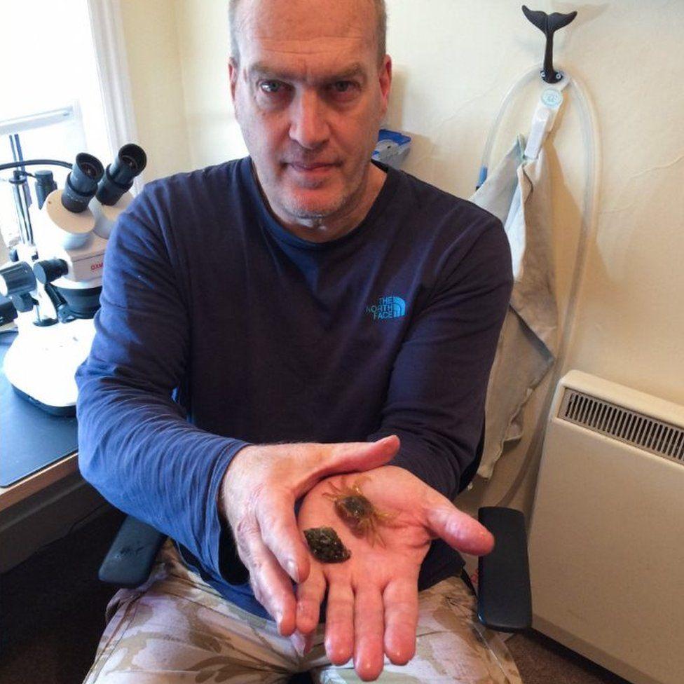 Steve Trewhella holding crab and shell
