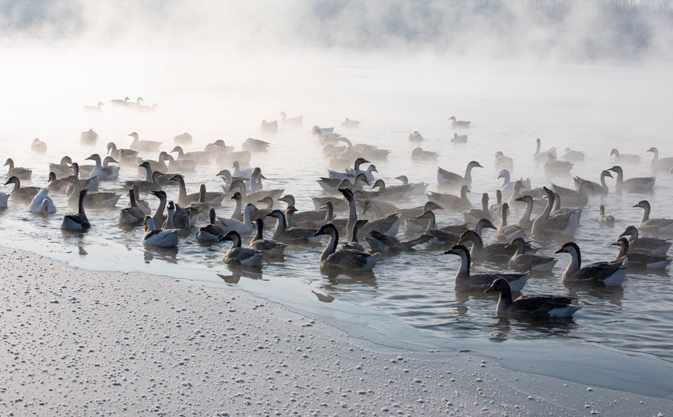 Birds swim as mist rises from the Hun River, in Shenyang, Liaoning province, China, on 29 January 2021