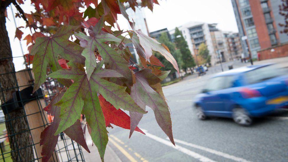 Urban tree (Image: City of Trees)