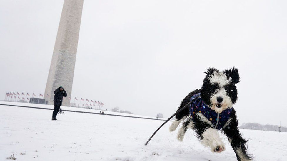 A dog plays in the snow on the National Mall during a snow storm