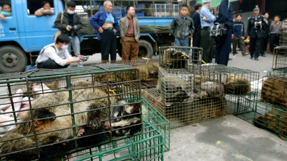 Government officers seize civet cats in Xinyuan wildlife market in Guangzhou to prevent the spread of the SARS disease in 2004