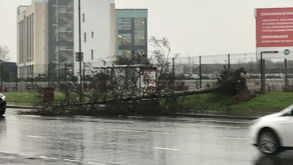 fallen tree on derry's strand road