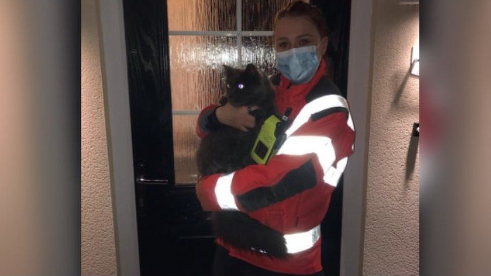 cat after being rescued
