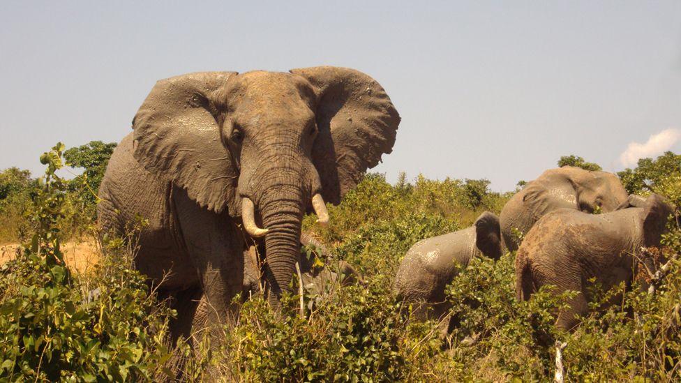 Elephants at Mwaluganje Elephant Sanctuary