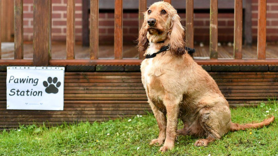 """Dog outside a """"Pawing Station"""" sign"""