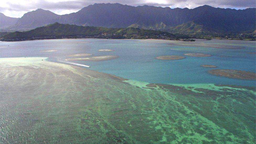 Coral reef off the coast of Oahu, Hawaii