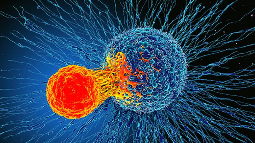 T-cell attacking a cancer cell