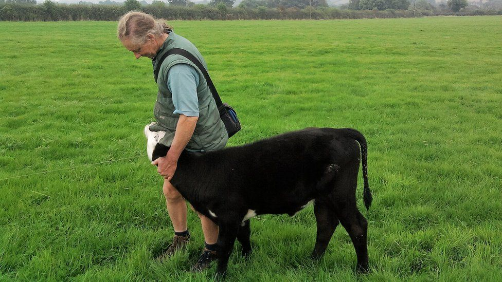 Jay Wilde with one of his calves