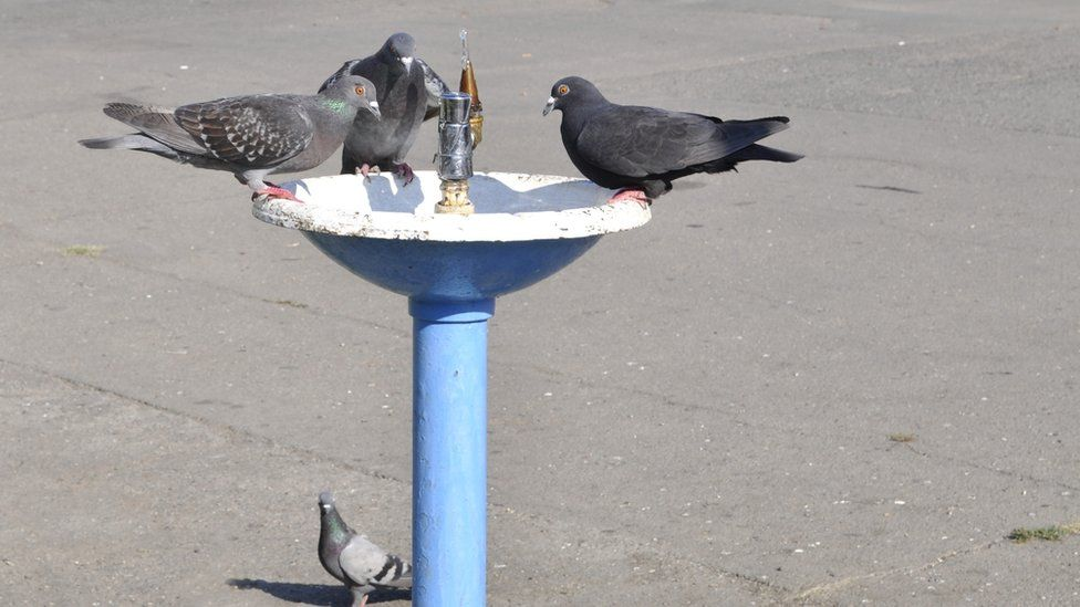 Pigeons on a water fountain