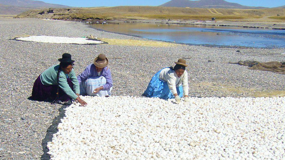 Chuño, el secreto milenario de los Andes para lograr que una papa dure 20 años - BBC News Mundo