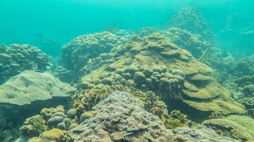 View of the Varadero reef