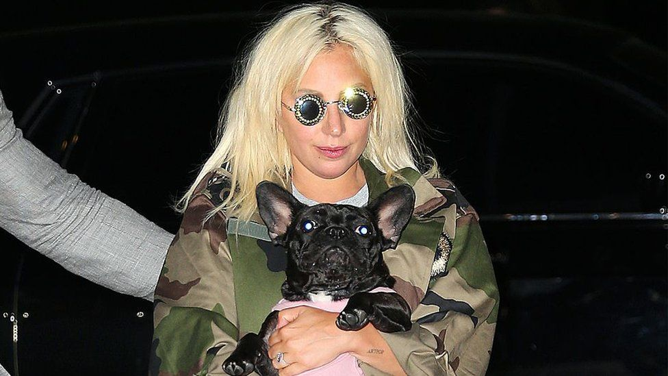 Lady Gaga: Five arrested in dognapping case thumbnail