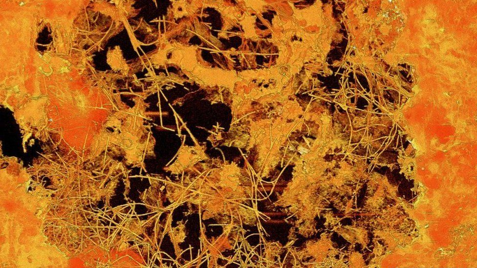 The fossil fungi were inside a bubble of lava 0.8mm in diameter