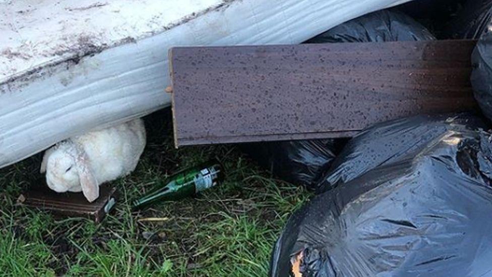 Rabbit found among rubbish