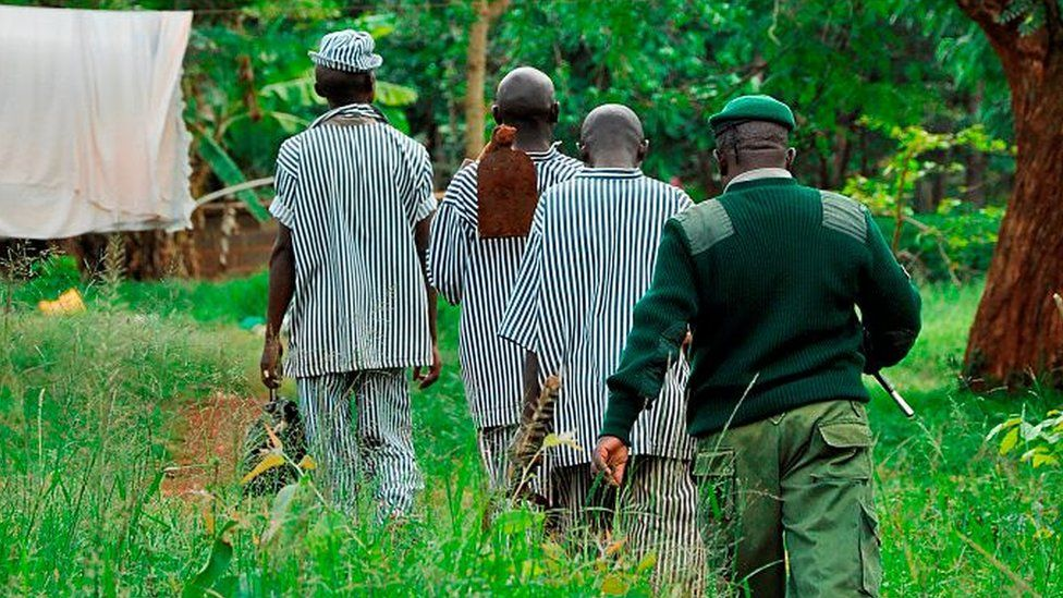 Kenya. Nairobi. Kamiti Village. Prisoner Going To Work