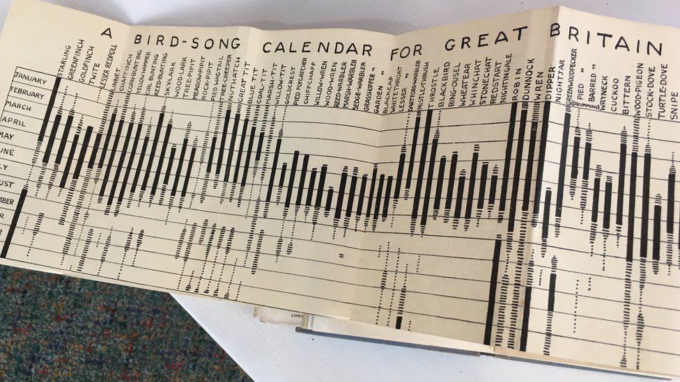 Birdsong calendar