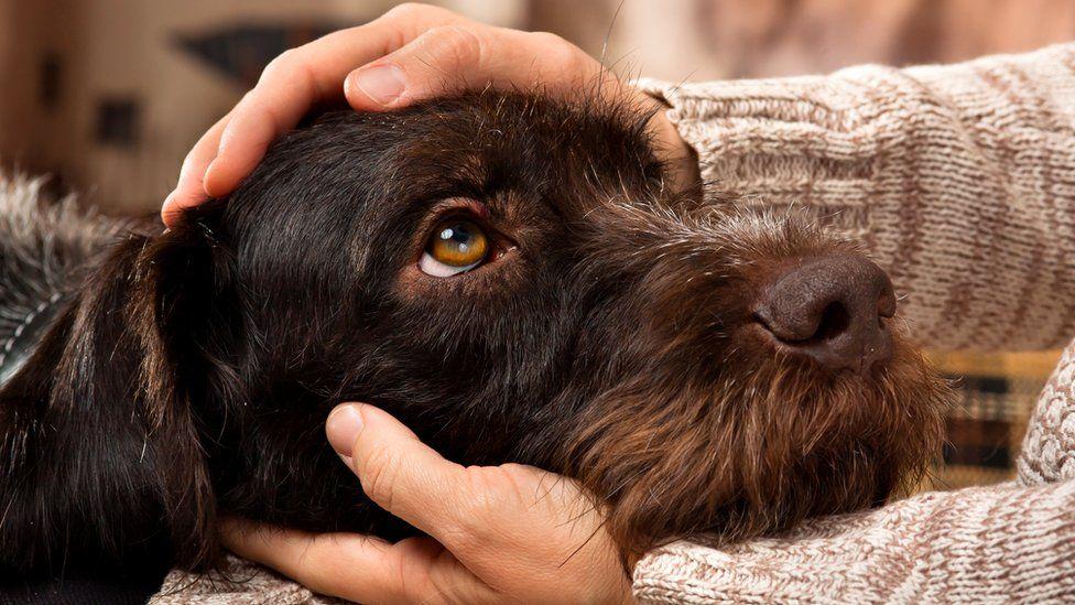 Голова собаки в руках человека