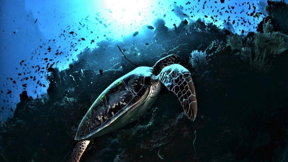 Turtle swimming through a reef