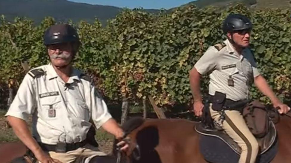 French horseback patrol of vineyards, Haut-Rhin District, September 2018