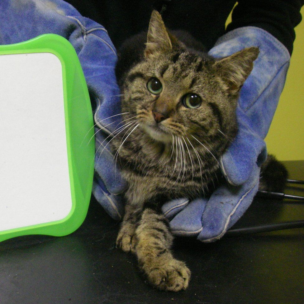 Cat rescued from bungalow