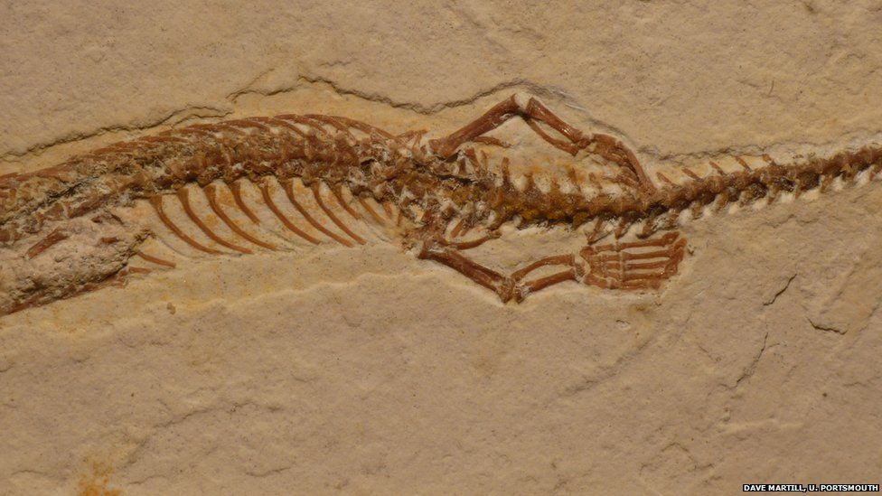 legs on the snake fossil