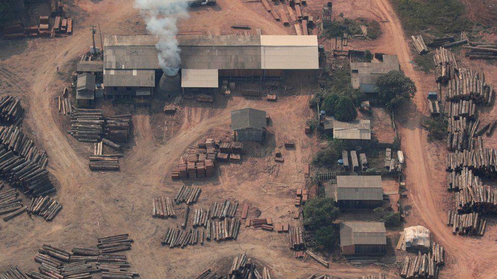 World 'losing battle against deforestation'