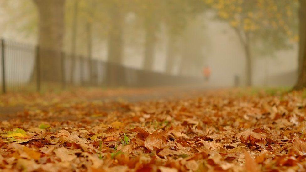 Runner in Highbury Fields