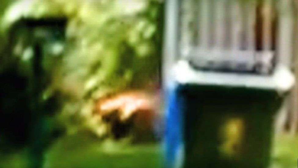 A freeze fame from a video which its creators claim shows a Tasmanian Tiger