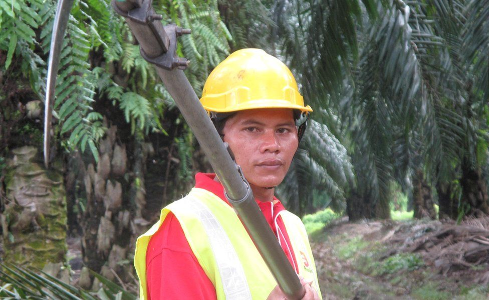 Sime Darby palm oil worker