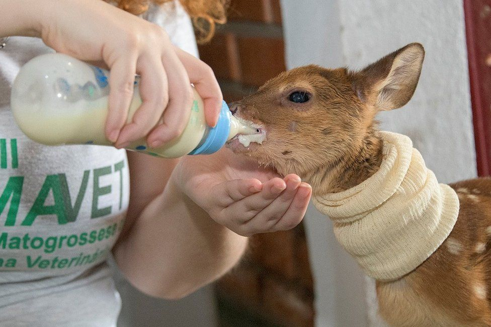 A deer is fed with a bottle