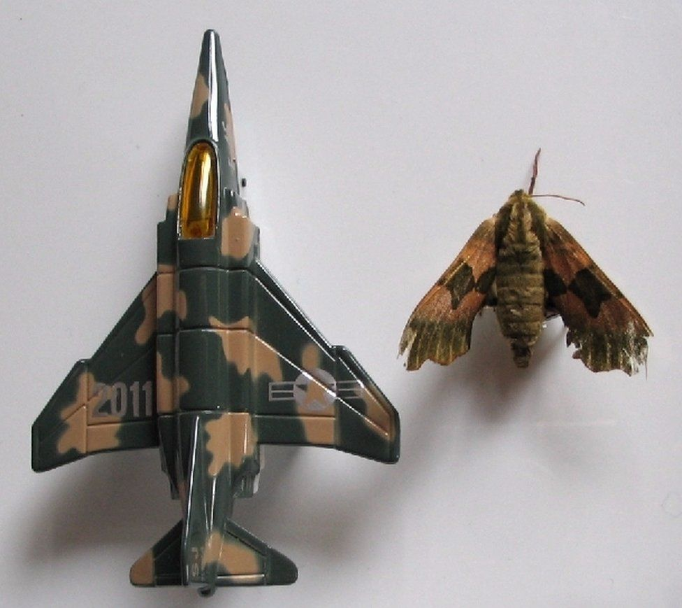 A moth is pictured alongside a model jet that looks similar