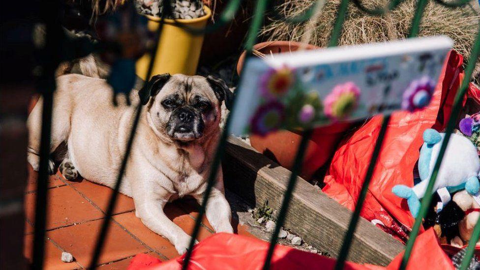 A dog in the sun