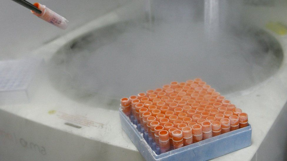 Frozen embryonic stem cells in a laboratory