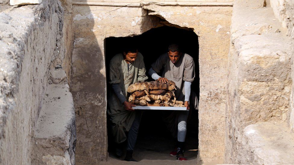 Mummified cats are brought out from a tomb near the King Userkaf pyramid complex in Saqqara Necropolis on November 10, 2018