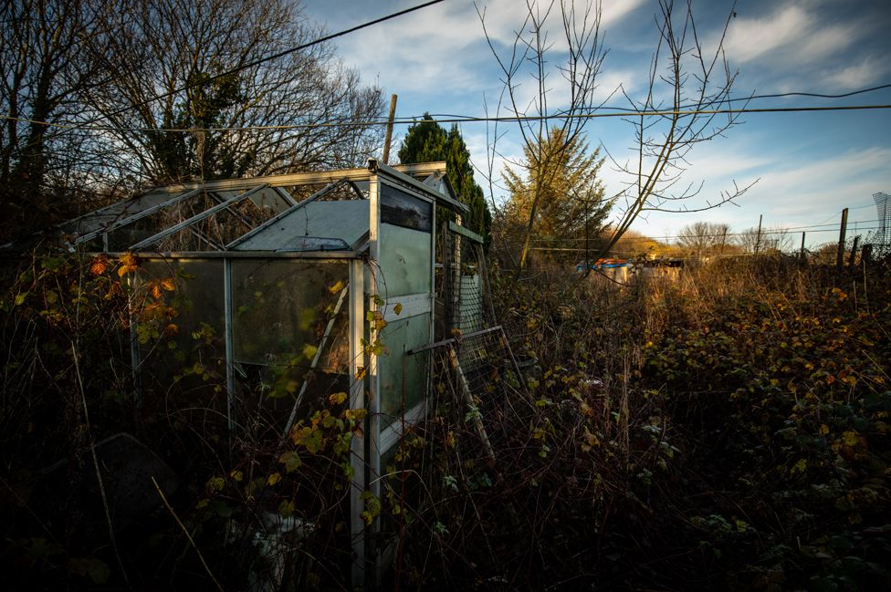 Greenhouses on the allotment