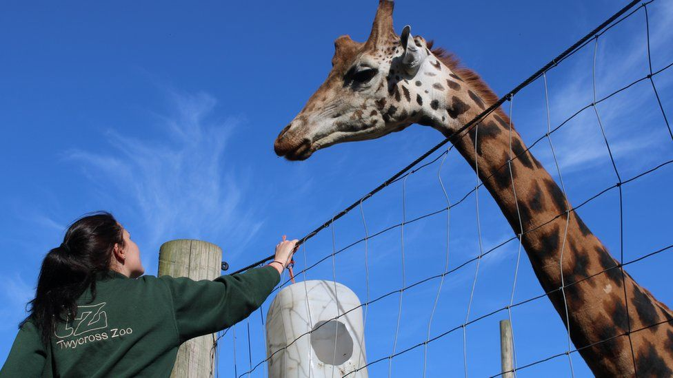 Keeper with a giraffe