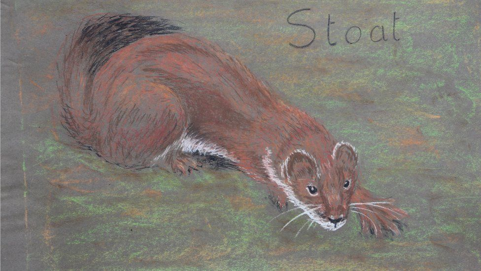 stoat sketching by mabel colhoun