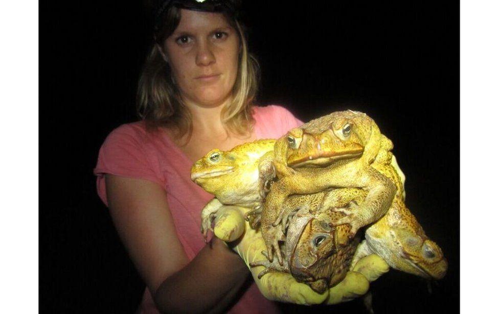Kimberley Toadbusters