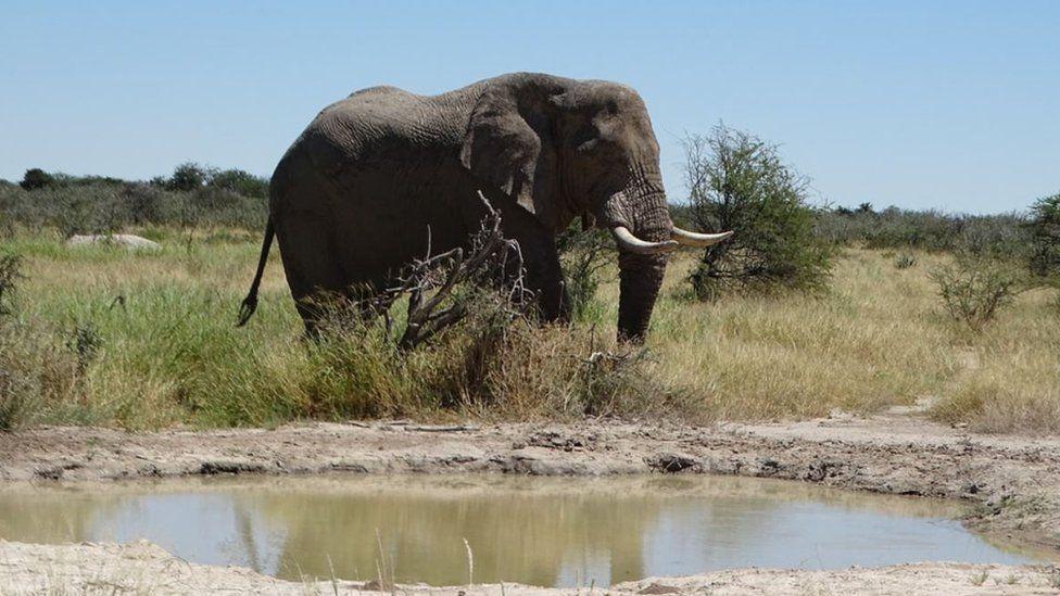 Національний парк Etosha, Намібія